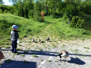 37)  Walks through the Orchard trail system, ending up at the duck pond.