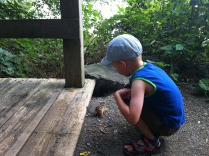 52)  Hand-feeding chipmunks at the LaSalle marina.