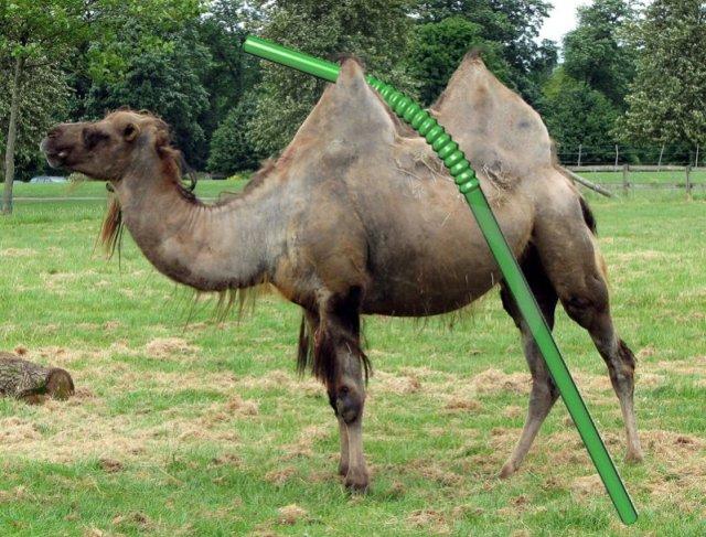 Straw. Camel's back.  